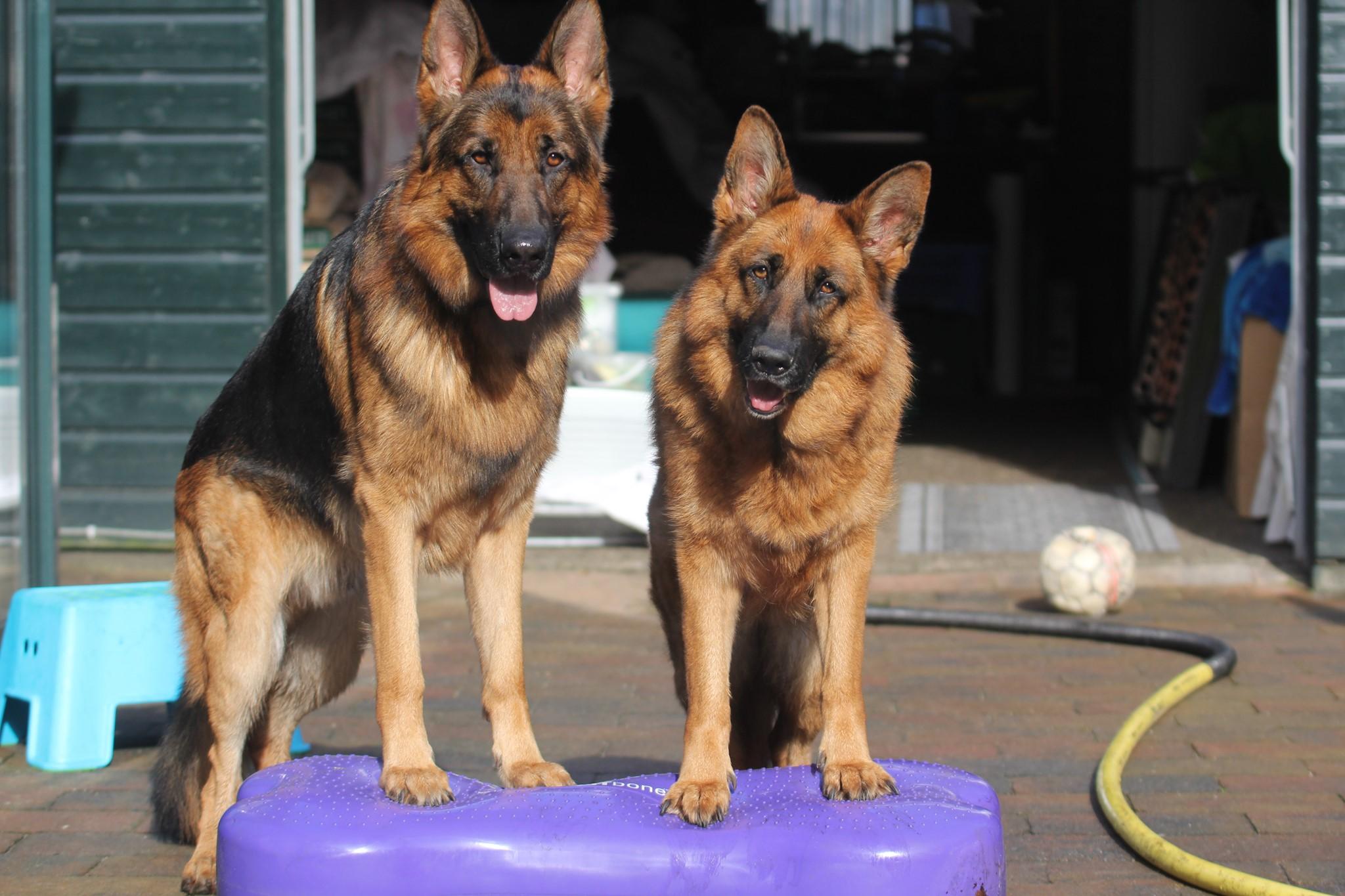 Fitte Honden en fitte bazen